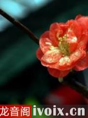 小齊老師的課堂之《夢想的種子,詩歌的天空》